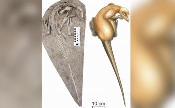 اكتشاف ديناصور جديد في الصين
