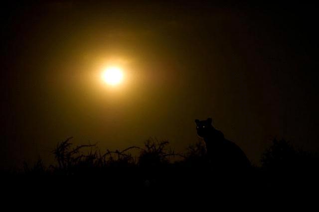 """افضل صورة لـ""""ناشونال جيوغرافيك"""" كوكبنا big2012829623RN601.jpeg"""