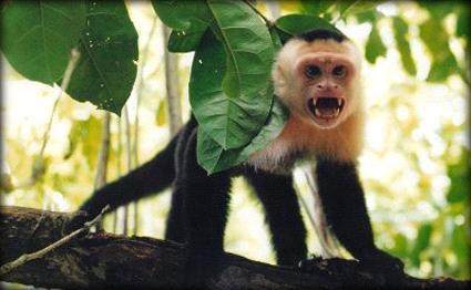 القردة تحتل مدرسة سعودية 201212181124RN320.jpeg